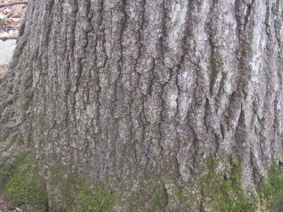 Tree #3