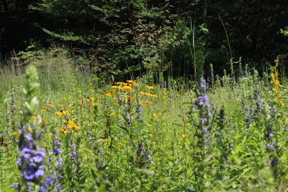 Wildflower Meadow: Garden in the Woods
